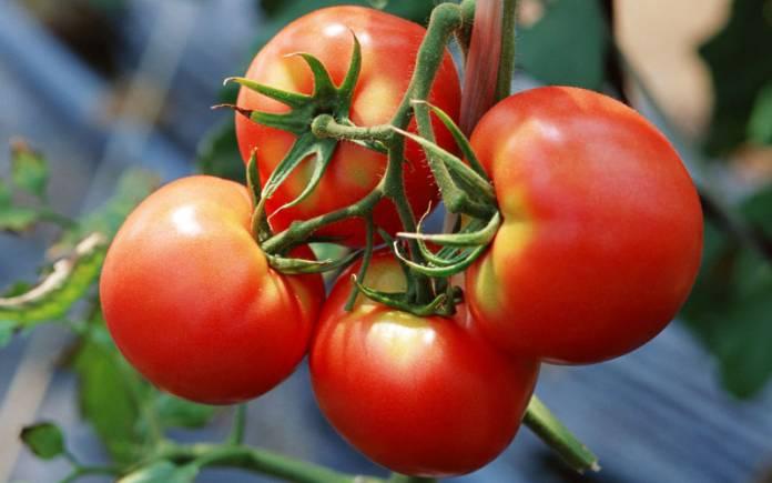 pomidor-na-vetke_696x435
