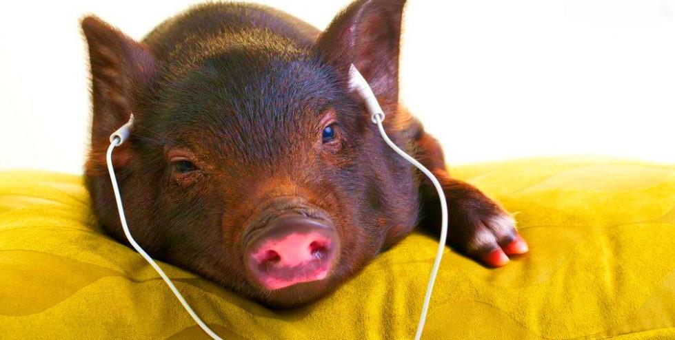 В чём встречать Новый год 2019 Свиньи?