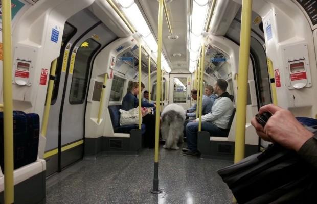 1470664047_london_subway_dog_01.jpg