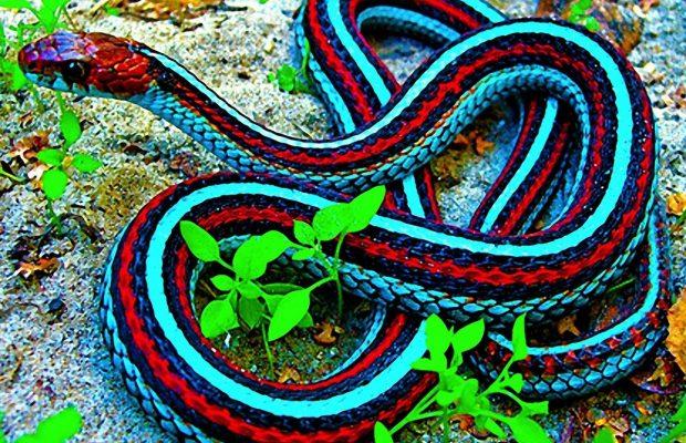заставка на телефон змея № 57086 бесплатно